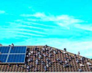 Palomas sobre tejado